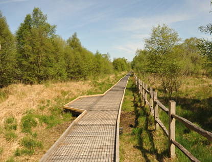 Raised boardwalks through the Bog