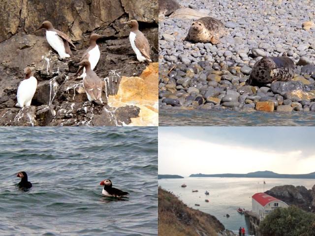Visit Ramsey Island