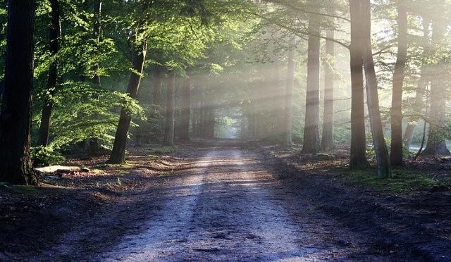 welsh woodlands