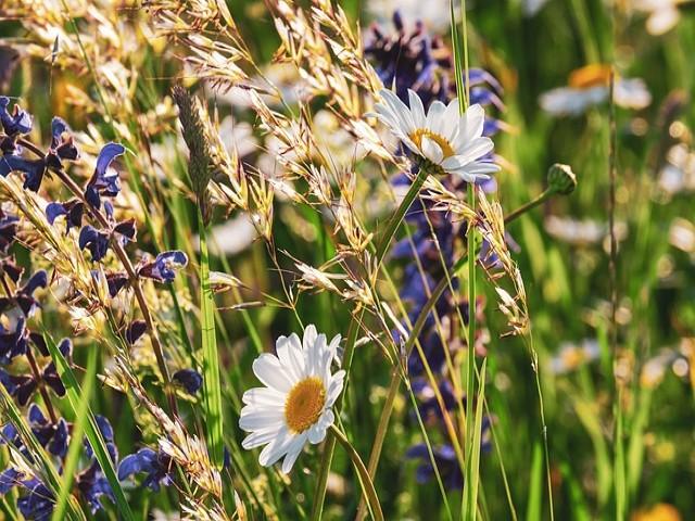 Colby Woodland Garden Amroth