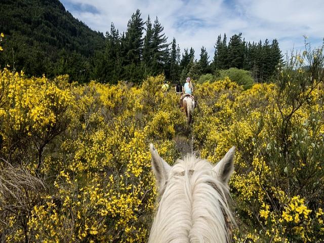 horse riding amroth