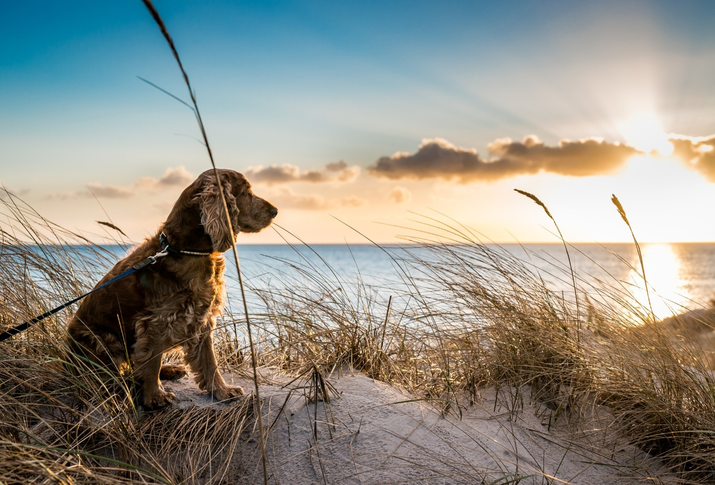 dog-friendly beaches in Pembrokeshire